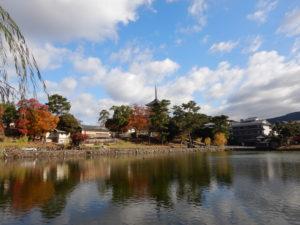 画像:11月20日(水)★園外保育~奈良公園~★