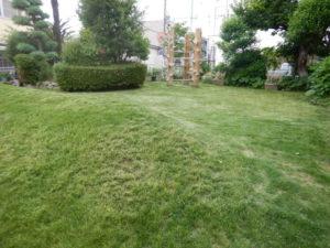 画像:芝生が短く綺麗になったよ~!