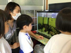 画像:6月11日(木) 幼稚園探検&ゲーム遊び&年中.年長体操