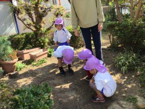 画像:10月29日(木)2歳児すみれ組のお外遊び