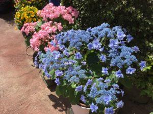画像:3月31日(水) 園庭にやってきた春♫